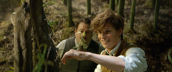 Fantastic Beasts and Where To Find Them Film Review coronawithawolf Bowtruckle Redmayne