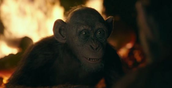 'War For The Planet Of The Apes' Film Review Monkey Business Bad Ape